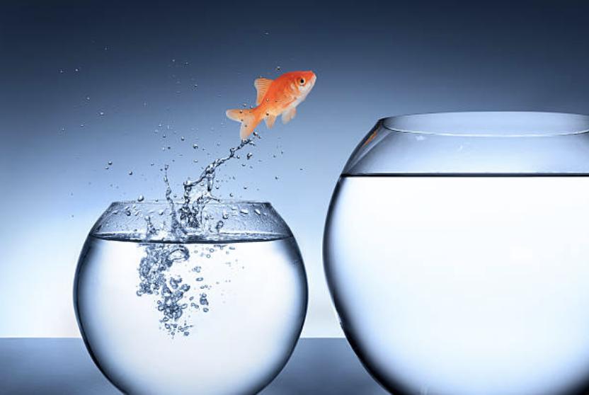 concept management poisson sautant de petit bocal vers grand bocal